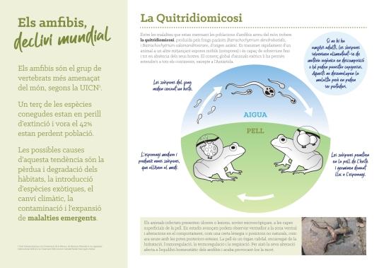Tri¦üptic Amfibis DEF_page-0002